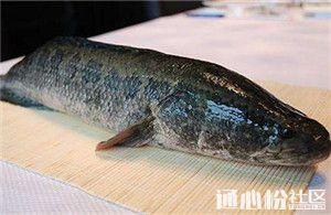 冰雪压塘,增氧机也被冻住!华东黑鱼如何抗寒过冬?