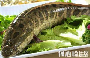 广东生鱼新老鱼齐涨价!这波涨价潮能否持续到春节前?