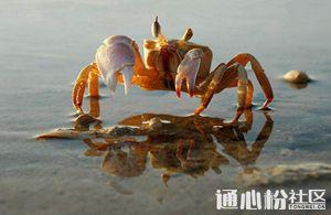 冬春大水面放养螃蟹该注意什么?这些技术要点请掌握!