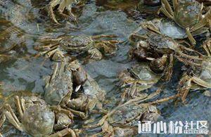 河蟹养殖如何增强营养?这5个关键点不能错过!