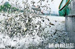 大宗淡水鱼鱼苗培育技术关键操作有哪些?