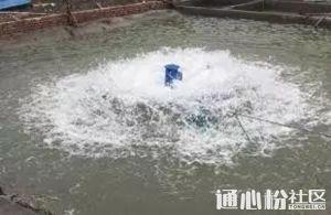 看看高产的池塘怎样使用增氧机的!