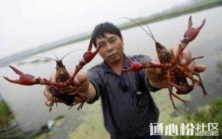 全国各地区今日最新小龙虾批发价来了!