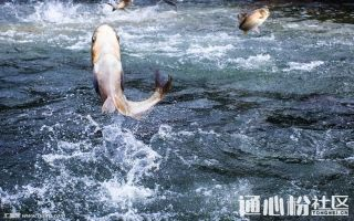 鱼价又来了!草鱼到底涨不涨?