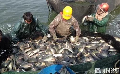 全国主产区一周鱼价行情独家播报