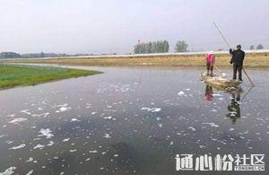 碘制剂在现代水产养殖中的应用与注意事项