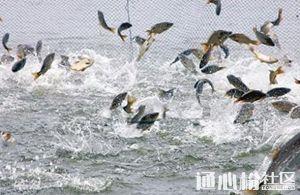 7月上旬珠三角、粤东、福建、广西、粤西地区最新鱼价行情