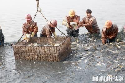 华东鲫鱼大涨,最高已卖到8.2元/斤 | 一周鱼价行情独家播报(7月6日-7月12日)