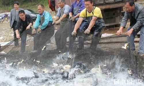 华南地区7月中旬鱼价行情