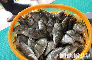 鳜鱼涨0.5元/斤!生鱼涨0.2元/斤!吴江加州鲈涨1元/斤!
