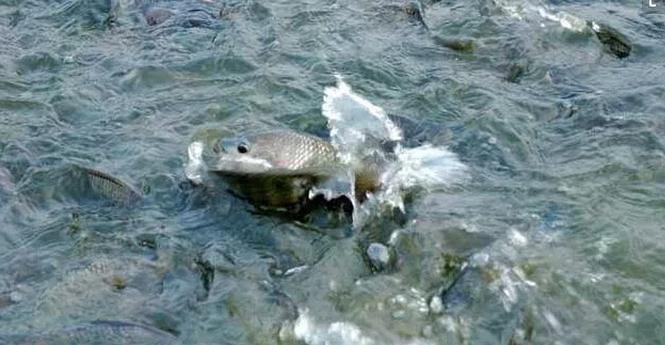 鱼苗越冬损耗率高达30%以上甚至全军覆没!原因分析及预防补救措施全在这里