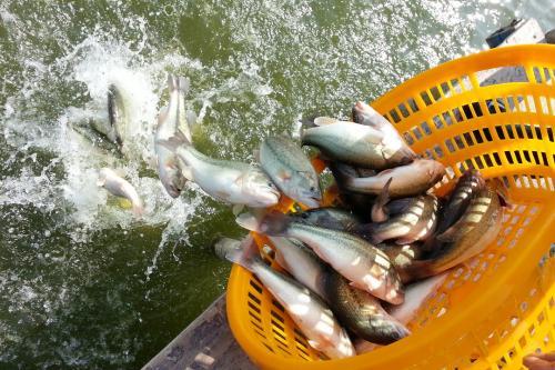 水花暴涨20元/万尾!多地成鱼上涨0.3元/斤!后市继续利好
