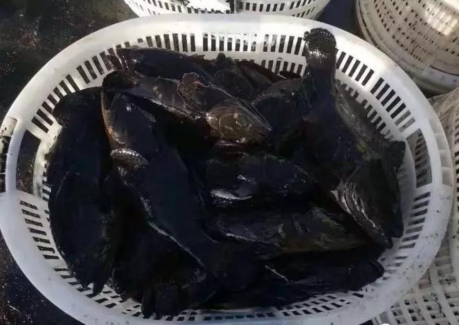 """后期石斑鱼会占领水产市场""""牛市""""?"""