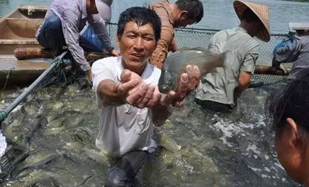 猪瘟、休渔期并行,小龙虾鲫鱼等暴涨,但为何水产养殖户都哭了?