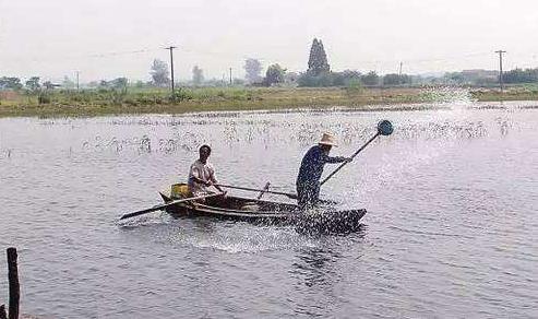 权威:8月全国水产养殖病害预测预报