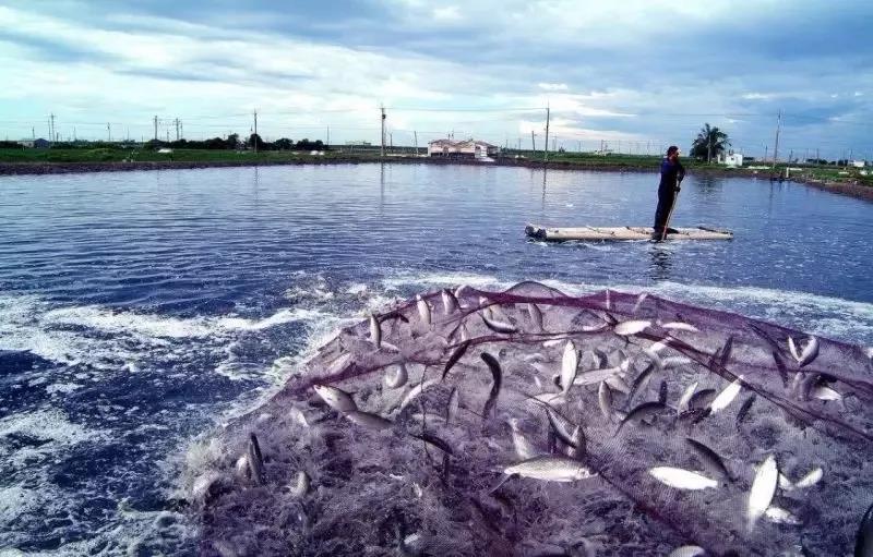 水产养殖保险有哪些?哪些损灾害可以得到赔偿?