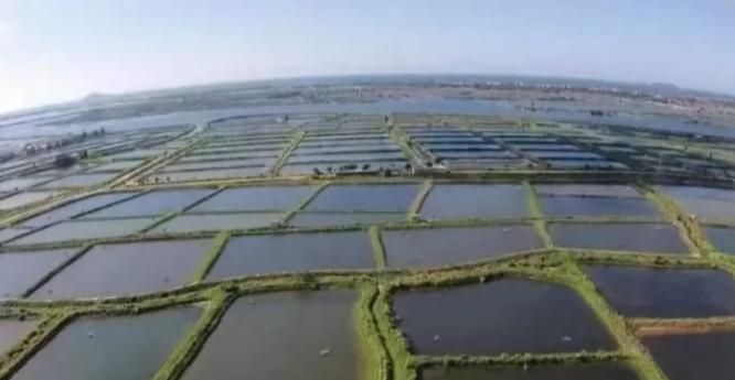 成本高、管理难、发病多!为什么水产养殖业越来越难搞?