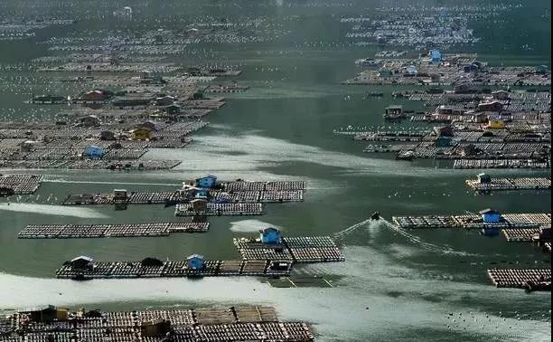 越来越严!禁养潮从内陆走向沿海,清拆会断送多少人的生计?