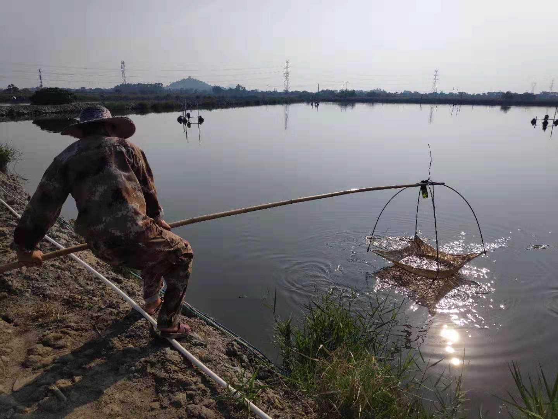 水产养殖将成最赚钱行业?连续28年位居世界第一!我国水产品产量达历史最高水平