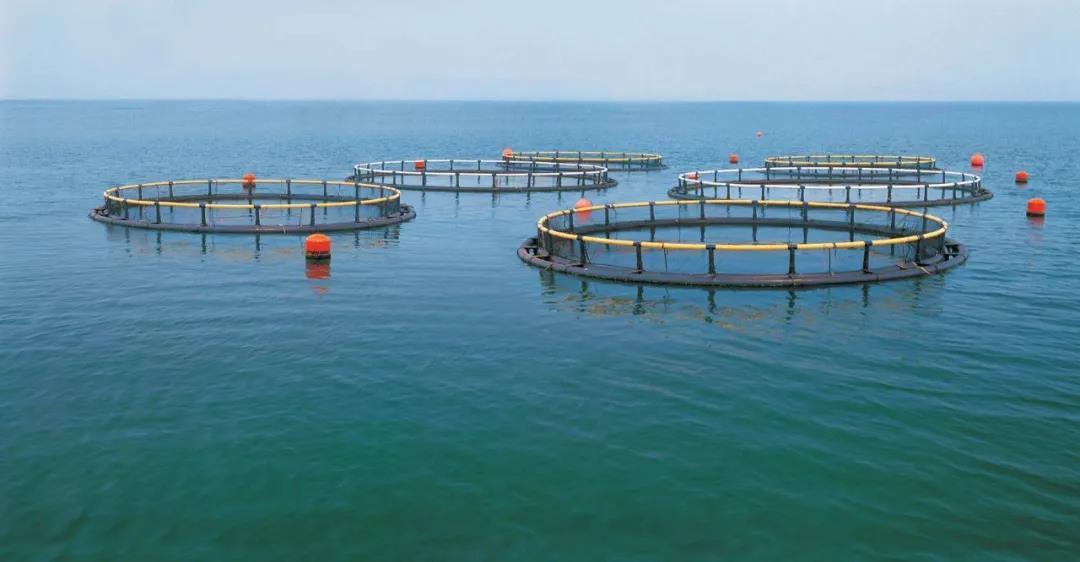 水产养殖有哪些补贴可以领?具体金额多少?2020年水产养殖补贴政策来了!