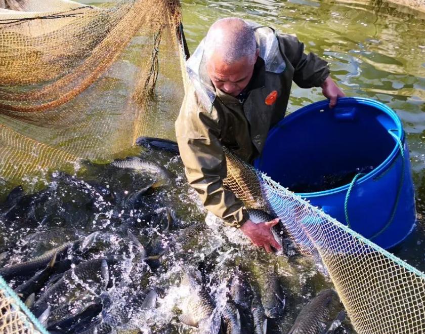 江西、湖北超100万斤草鱼被冲走,养户恐慌抛售,仅卖3.5-3.6元/斤!
