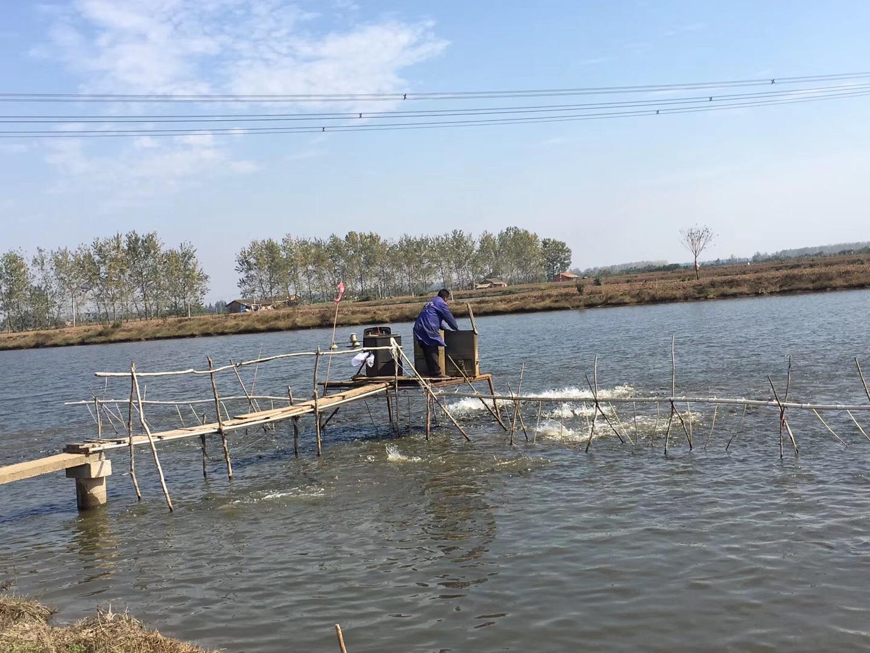 1月7新草、鲫、鲢、鳙等水产品各地批发市场价